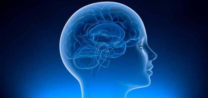 Imagen interior de la cabeza humana-concepto presente en las frases de Elon Musk