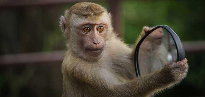 Un mono tiene un espejo en la mano
