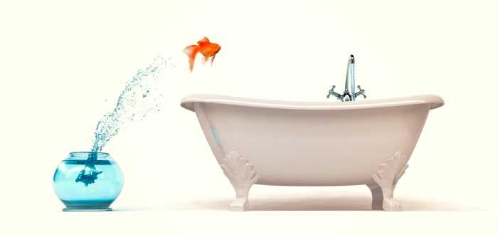 pez saltando de una pecera a una tina